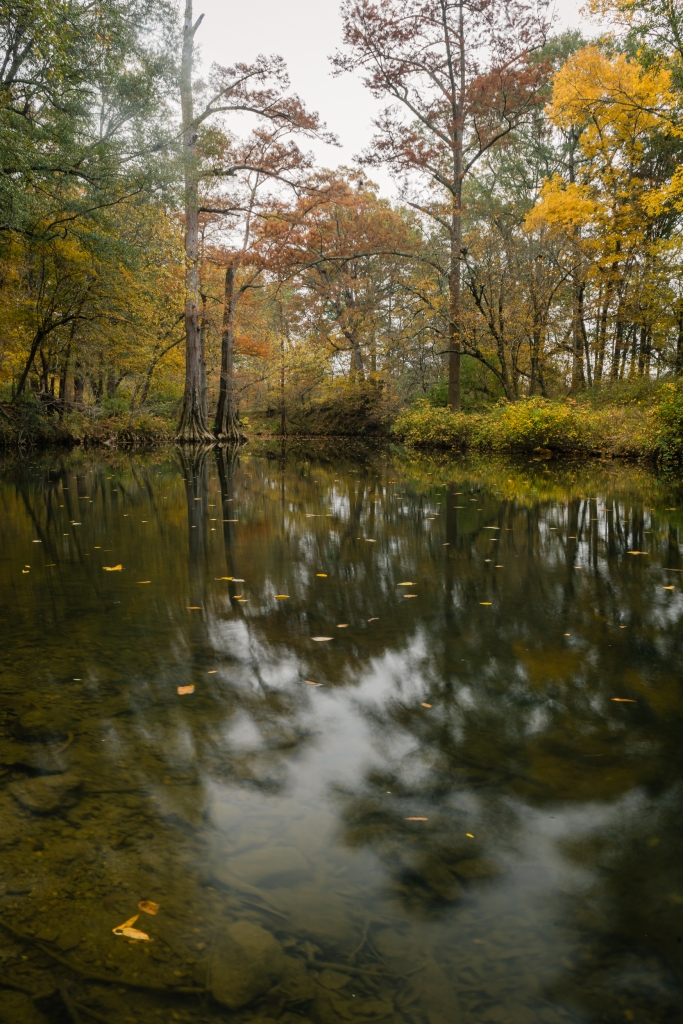 Autumn leaves on a small creek