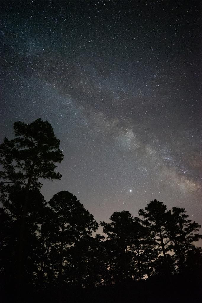 Milky Way over pine trees