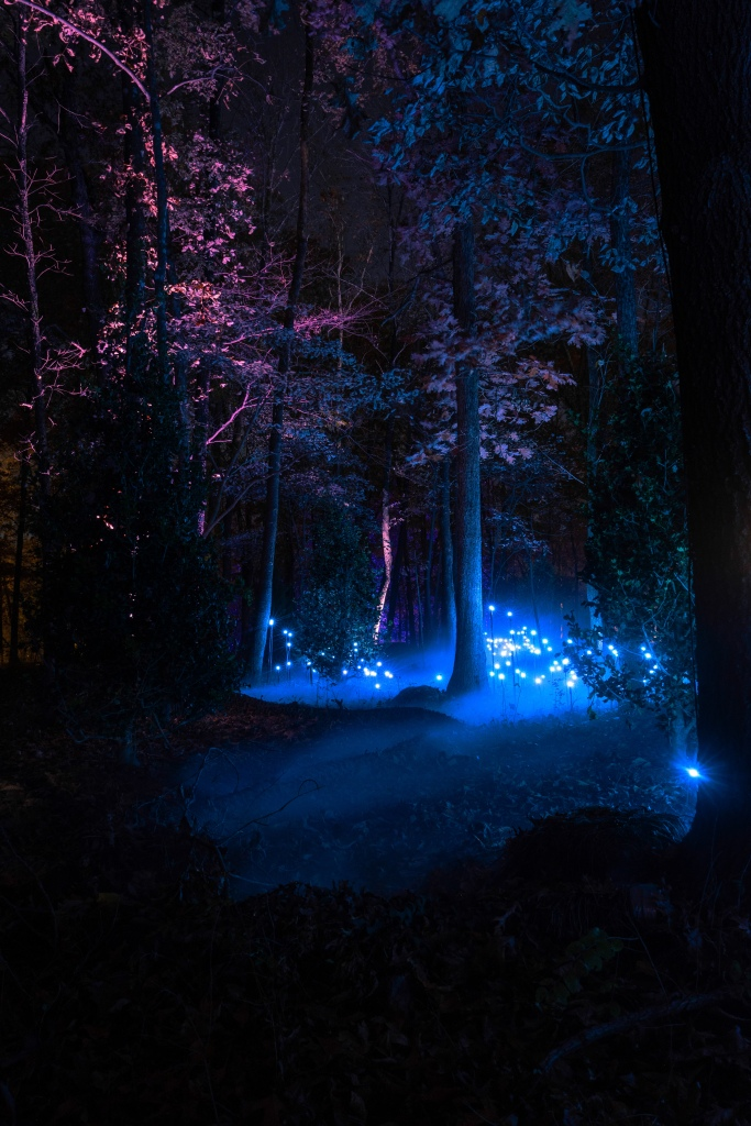 The North Forest Lights exhibit at Crystal Bridges Museum in Bentonville