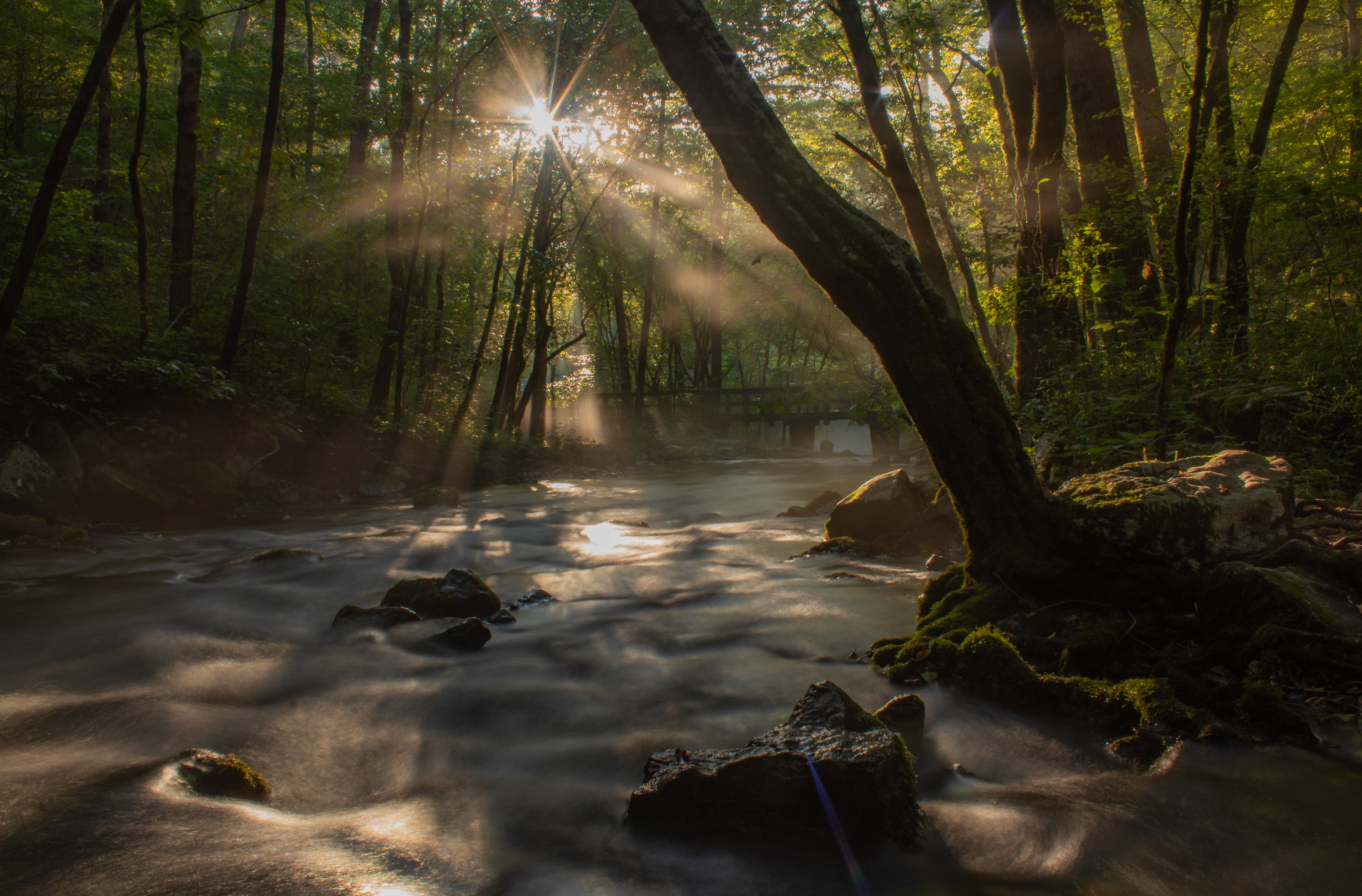 Golden sun rays pouring through a misty forest scene with a stream.