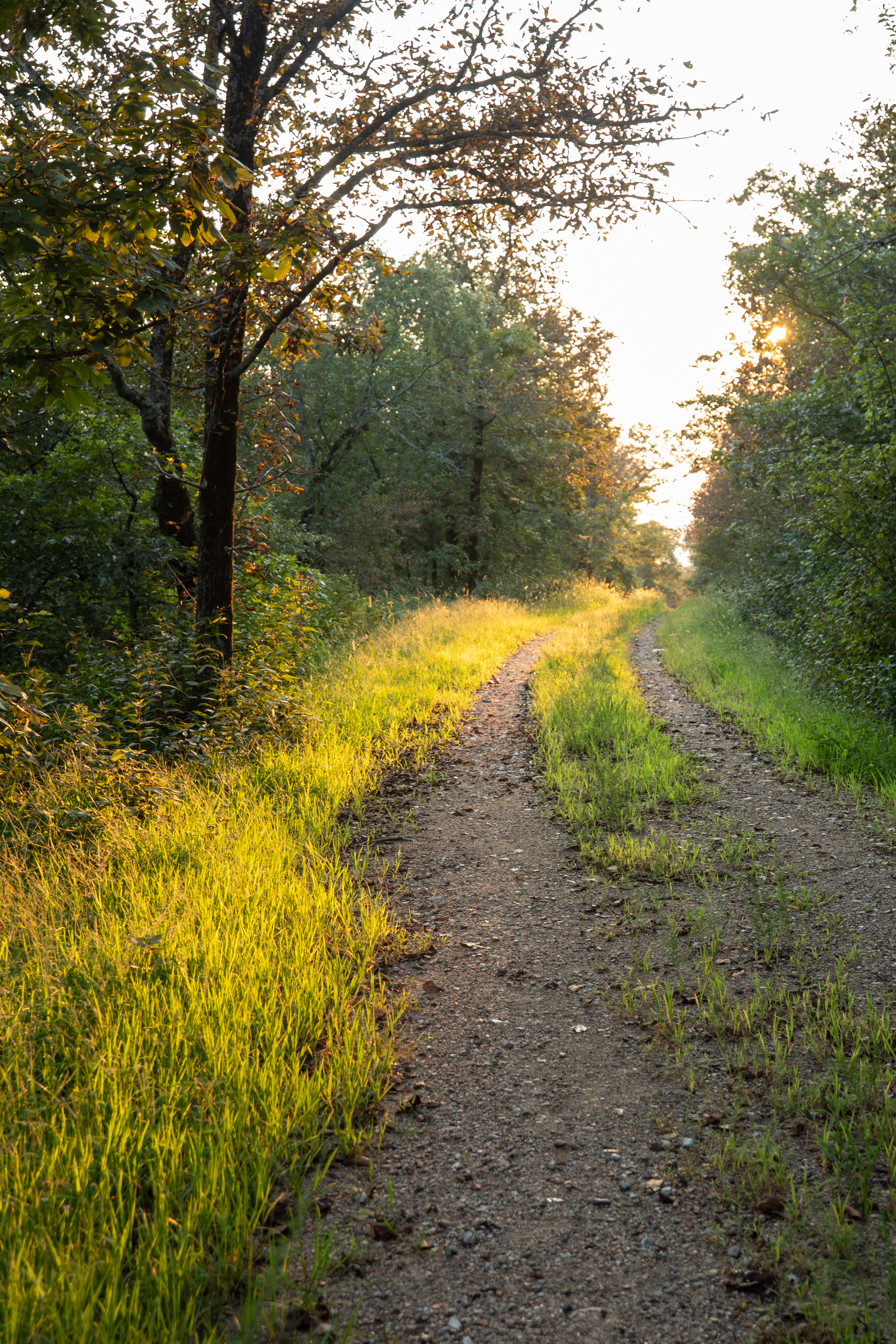 The road to the fire tower in the morning light