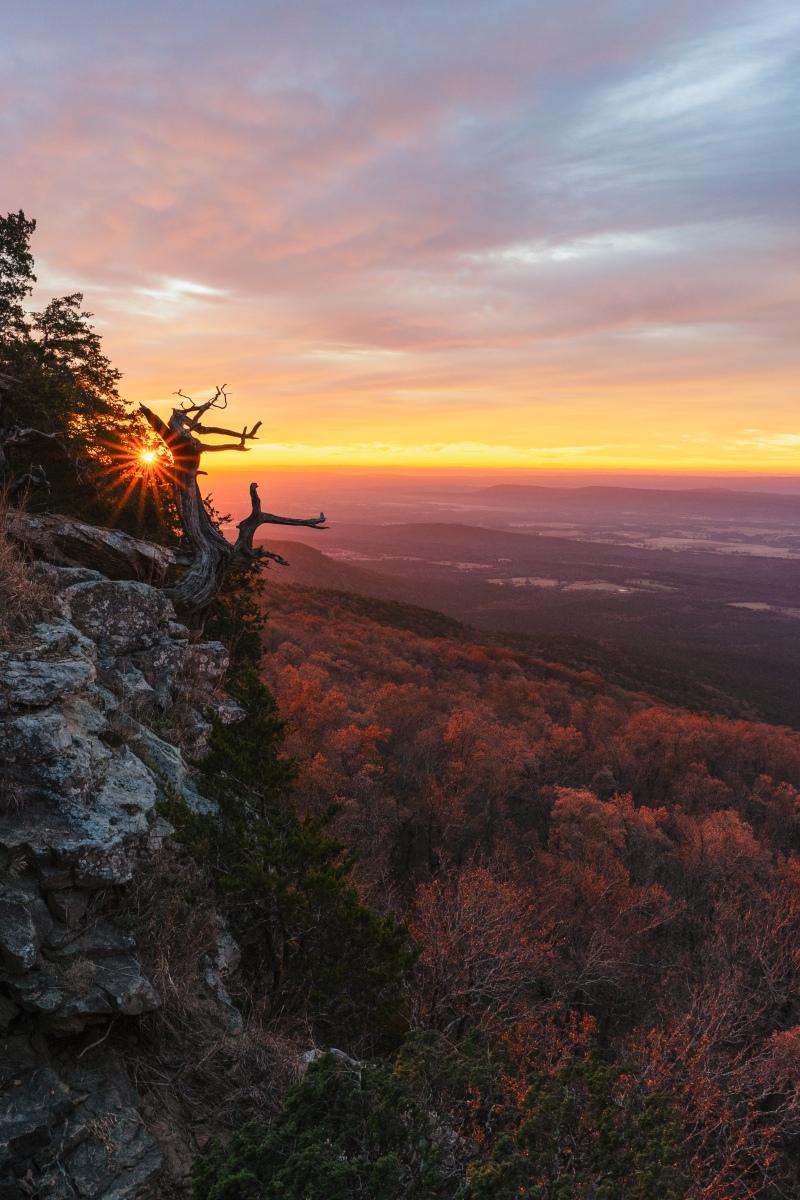 Bright red sunrise over cedar tree at Mount Magazine