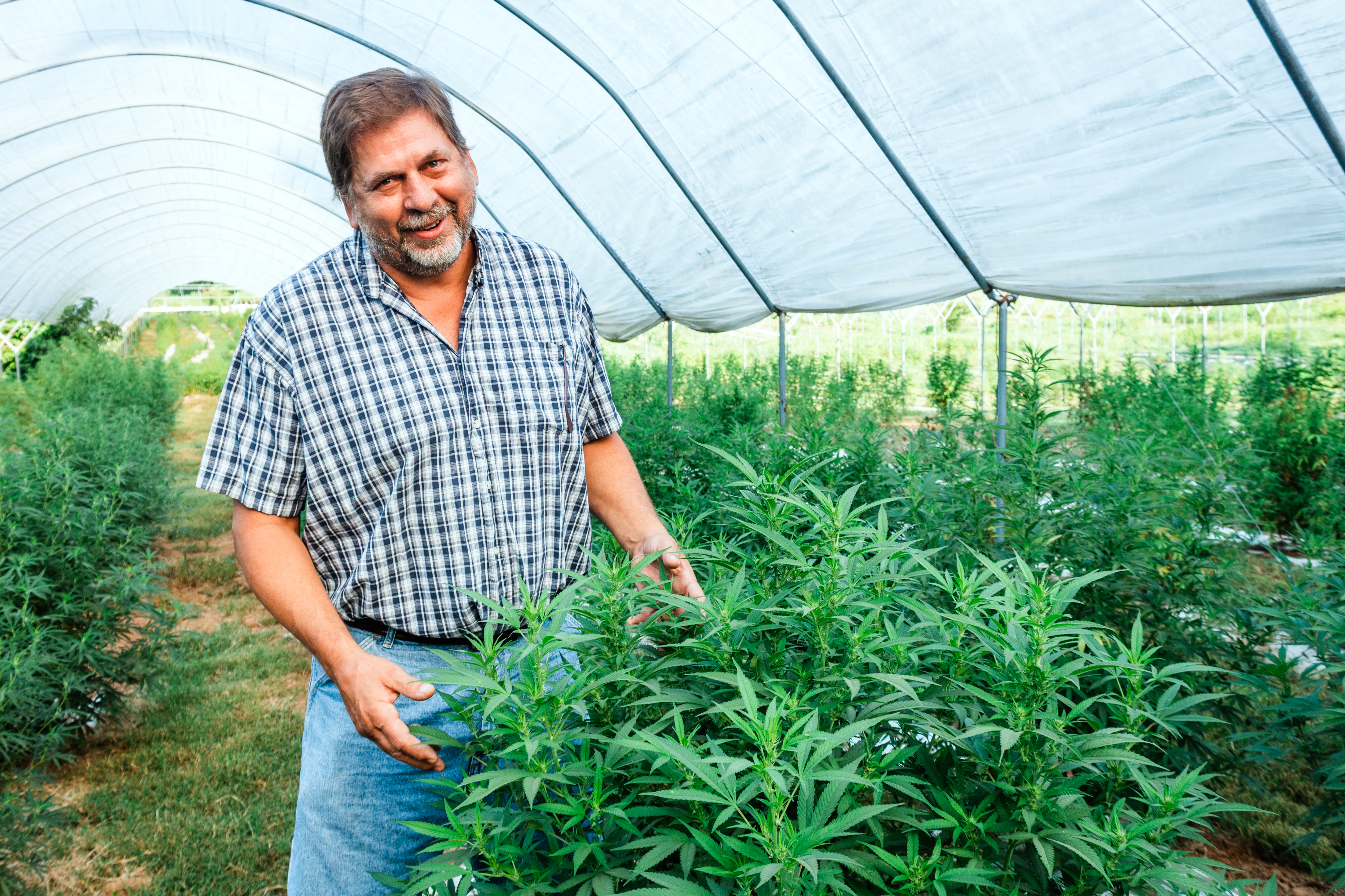 Man smiling and gesturing over cannabis plants
